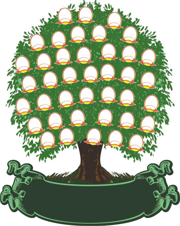 Дерево родословной шаблон